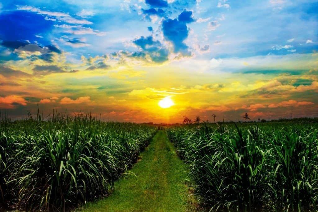 is sugarcane juice healthy